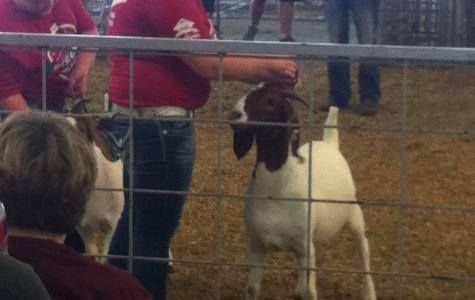 FFA Students Place in Area Screening Event