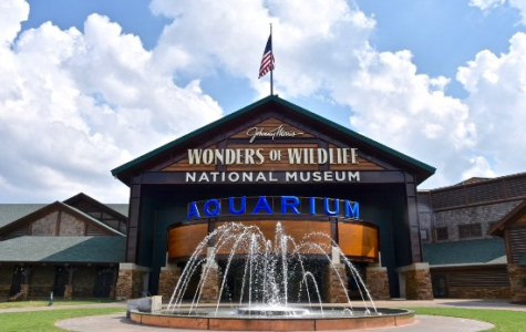 Wonders of Wildlife: Local Attractions to Visit