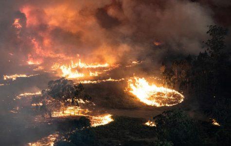 Bushfires and Rising Temperatures Devastate the Australian East Coast