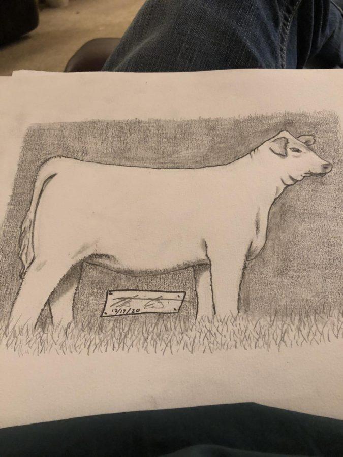 Illustration of a cow by Matt Crutcher.