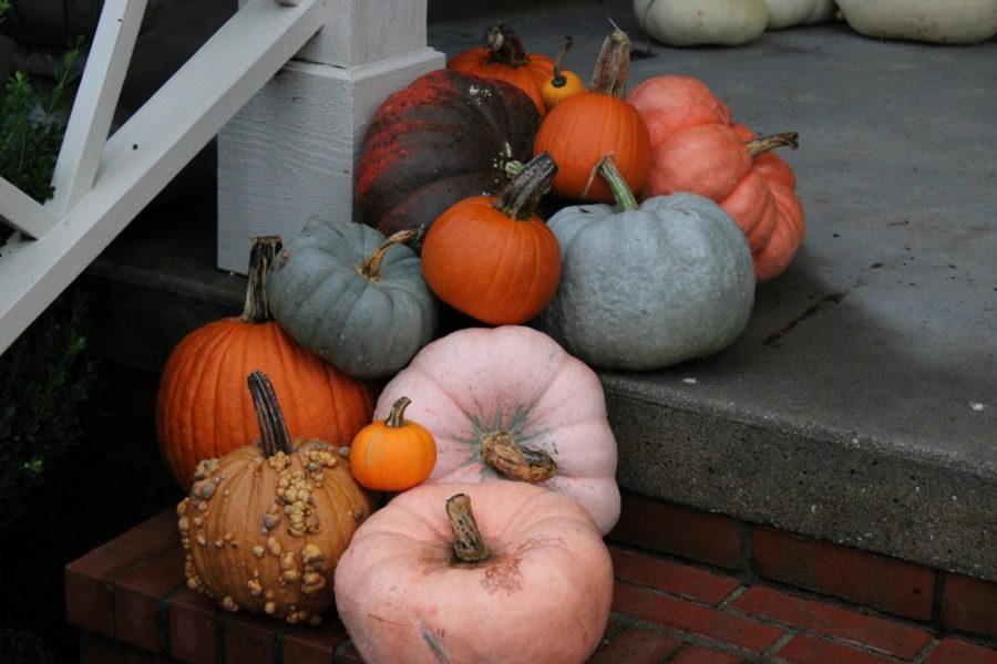 A group of pumpkins on the front porch stairs.